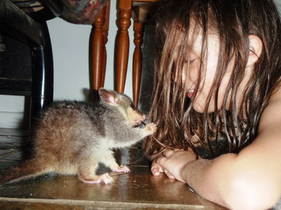possum eating lotem's hair