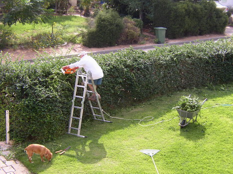 Eitan trimming the hedge